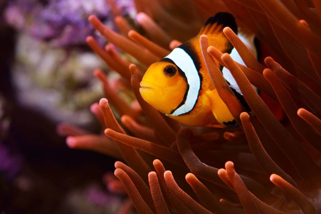 Clownfish from Sealife Scarborough Team Building Activities